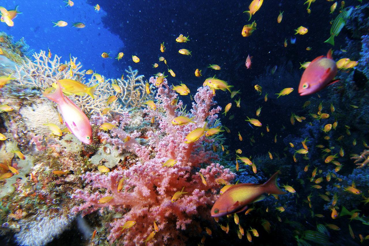 14 Nights Indian Ocean - Maldiverna