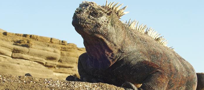 Drömresa – Galapagos
