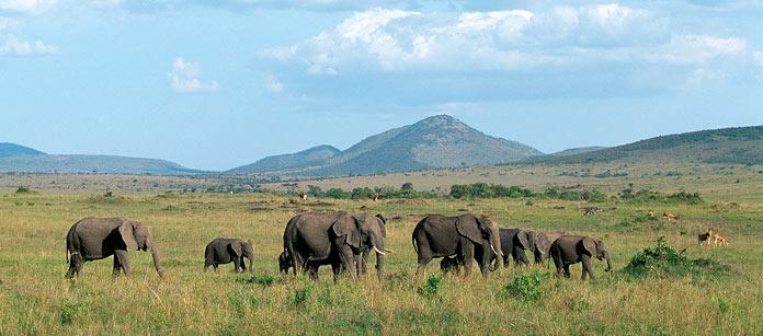 Kenyasafari - Amboseli, Nakuru, Masai Mara - 6 dag