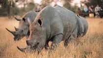 Kenyasafari - Amboseli, Tsavo West Safari - 3 dagar