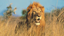 Kenyasafari - Flying Safari - 3 dagar