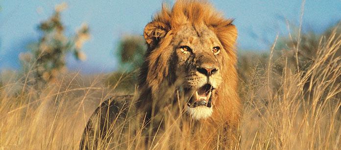 Kenyasafari - Flying Safari - 3 dagar