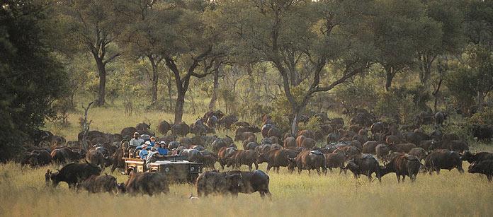 Privata safarilodger, Sydafrika