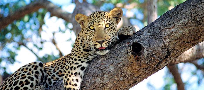 Safari i Krügerparken, Sydafrika - 3 dagar